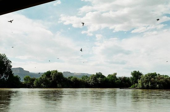 John Wesley Powell River History Museum: Swallows under the Green River bridge