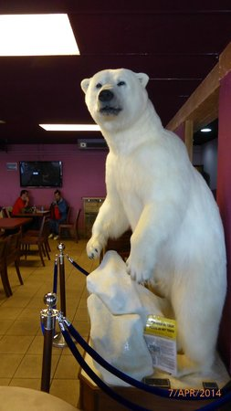Polar Bar Restaurant : Polar bear