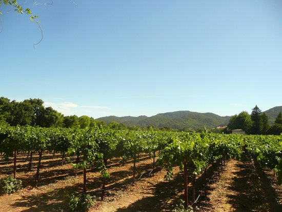 Bell Wine Cellars: vineyard