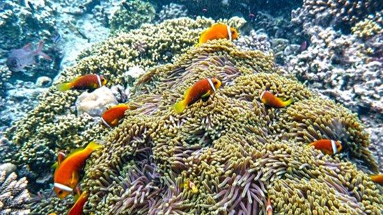 Angsana Ihuru: The Reef - Gorgeous