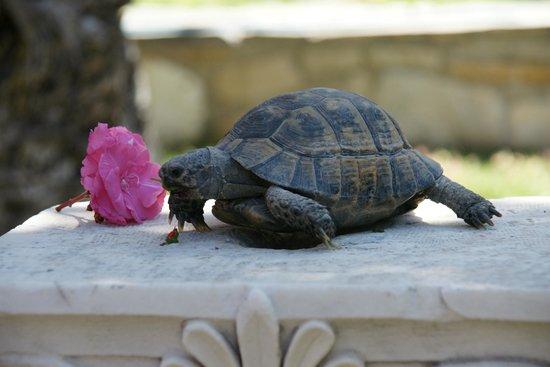 Cesme Castle: żółwik atrakcja na zamku :-)