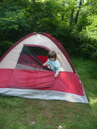 """Loft Mountain Campground: Area behind our tent """"niche"""" site F132"""
