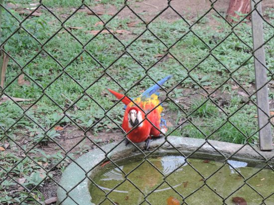 CIGS Zoo: Arara do CIGS