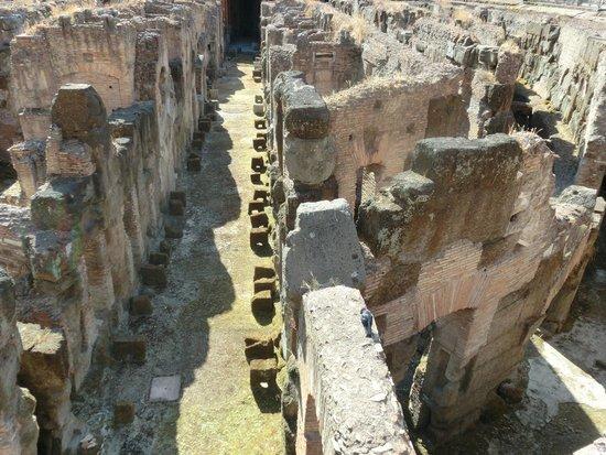 Колизей: Здесь жили гладиаторы