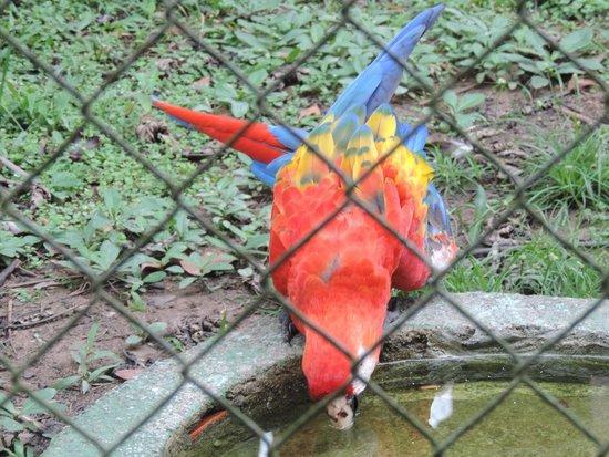 CIGS Zoo: Arara