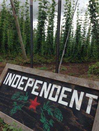 Rogue Farms Micro Hopyard : Independent hops