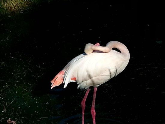 Dyreparken: Rosa Flamingo