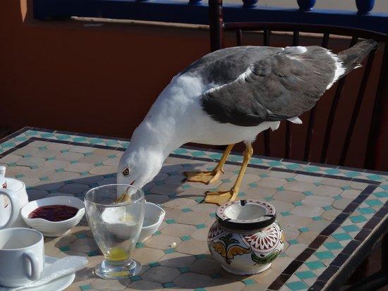Essaouira Wind Palace: Même les goelands aiment le petit dej...