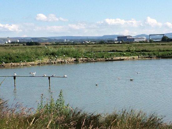 RSPB Saltholme: Birds