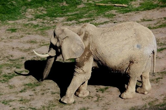 Opel Zoo: Blick auf die Elefantenanlage