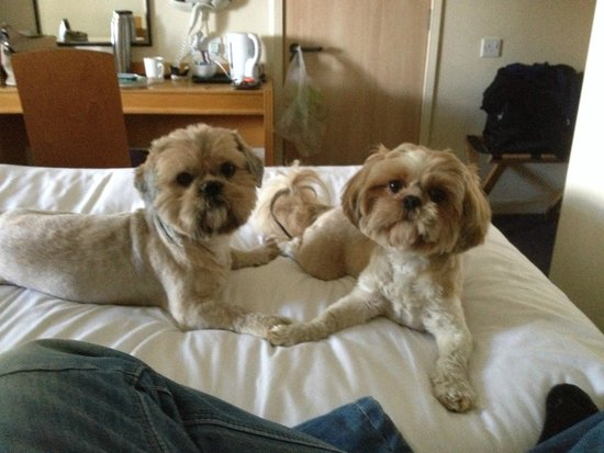 Days Inn Hamilton: DOG FRIENDLY DAYS INN