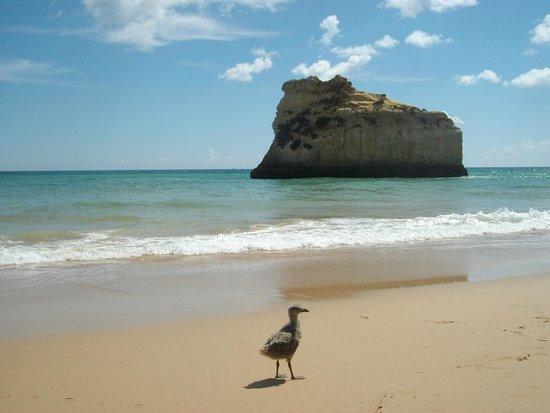 Praia de Alvor : paseo playero por alvor