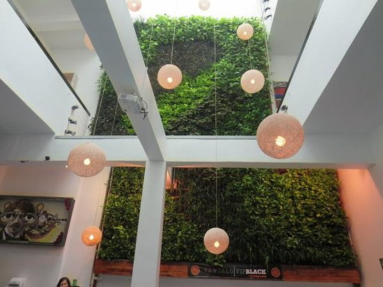 Tantalo Kitchen: Gorgeous growing wall