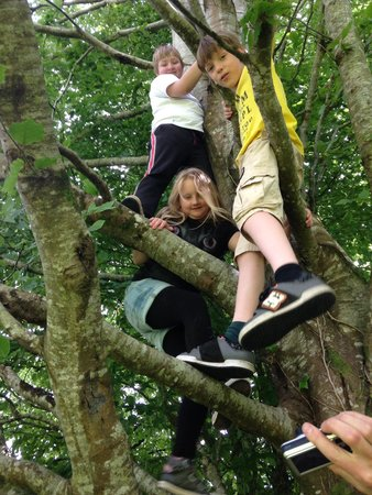 Lough Key Forest and Activity Park: Great climbing trees