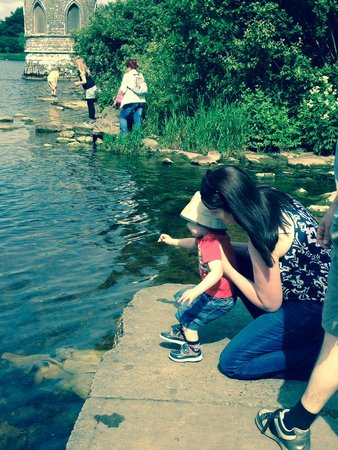 Lough Key Forest and Activity Park: Beautiful lake,lots of ducks to feed