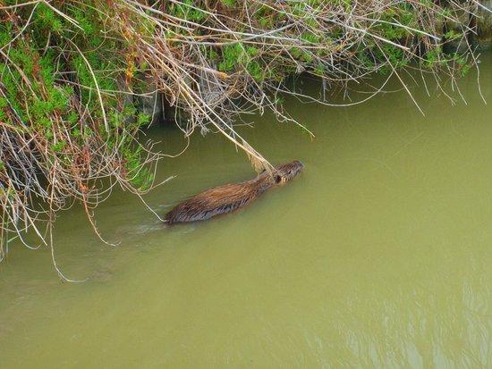 Le Parc Ornithologique de Pont de Gau : un ragodin