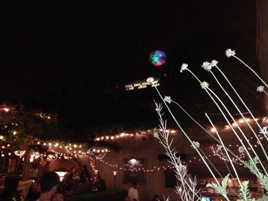 Jupiter: Twinkly lights, trumpet vine winding on the trellis, wine, and music