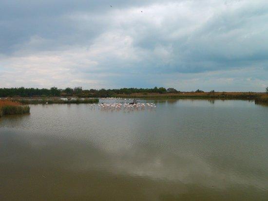 Le Parc Ornithologique de Pont de Gau : des flamants roses