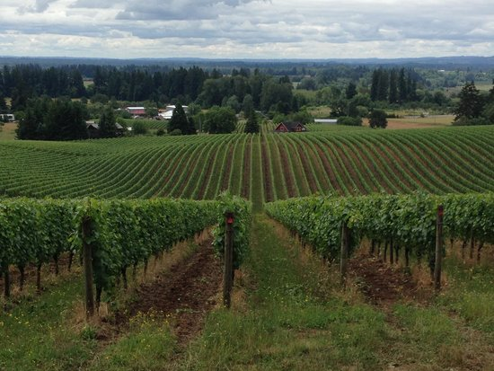 Sokol Blosser Winery: view across the valley