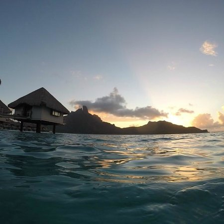 Le Meridien Bora Bora : View swimming outside bungalow 229