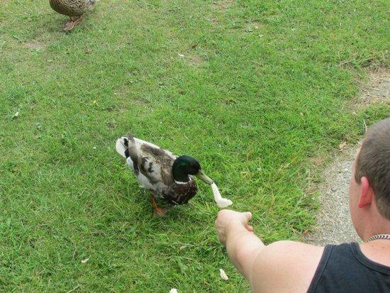 Broadland Sands Holiday Park - Park Holidays UK: The ducks that kept visiting our caravan