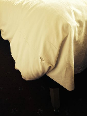 Roundhouse Hotel Bournemouth: holes in bed covers