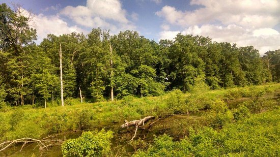 Mingo National Wildlife Refuge: Auto tour.