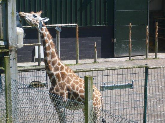 Blackpool Zoo: Feeding Time!
