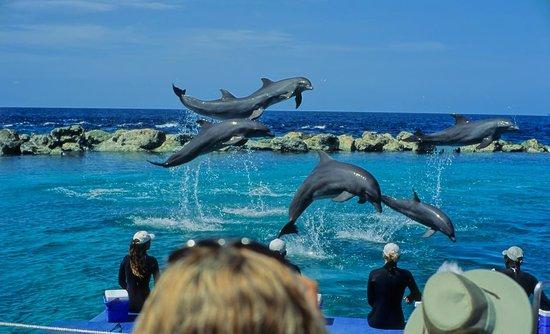 Dolphin Academy Curacao: Delphine bei der Show