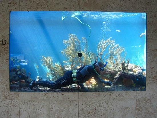 Dolphin Academy Curacao: Tolle Aquarien: Taucher bei der Reinigung