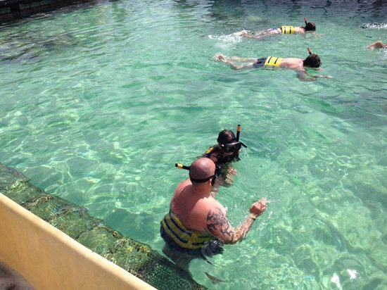 Dolphin Island : swimming  with sharks