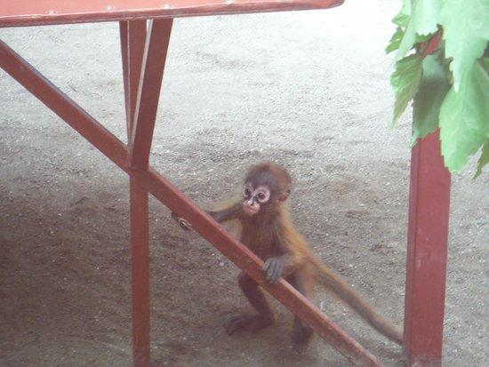 Fundación Jaguar Rescue Center: Monkey