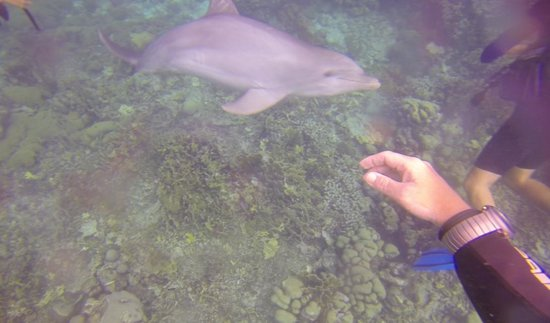 Dolphin Academy Curacao: Tauchen mit Delphin aus meinem Video. Streicheln möglich.