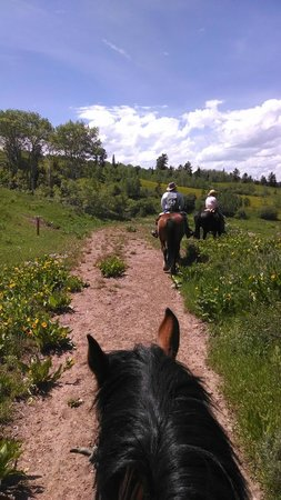 A-OK Corral / Horse Creek Ranch: blue skies, green shrubs, happy riders & horses!