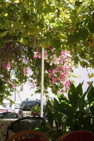 Cool Breeze Restaurant: Cool Breeze Floral