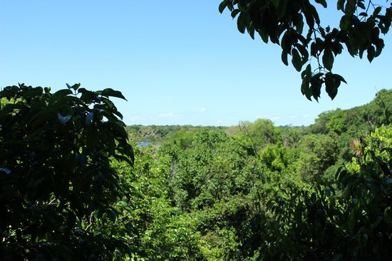 Amazon Tree Climbing: View from the canopy