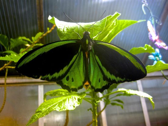The Original Mackinac Island Butterfly House & Insect World: Beauty in all things...
