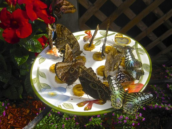 The Original Mackinac Island Butterfly House & Insect World: Our Butterfly Feeding Station