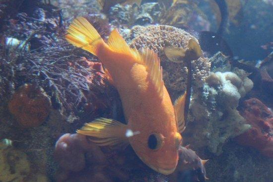 Monterey Bay Aquarium : Monterey Aquarium