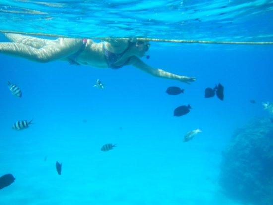Reef Oasis Beach Resort : я с рыбками