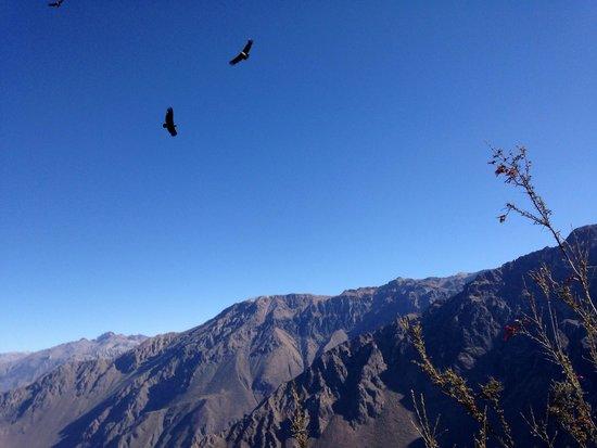 Condor's Cross: Condores