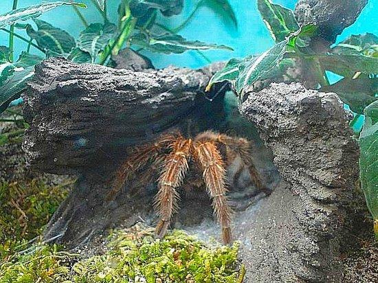 North Carolina Museum of Natural Sciences: big honkin' spider