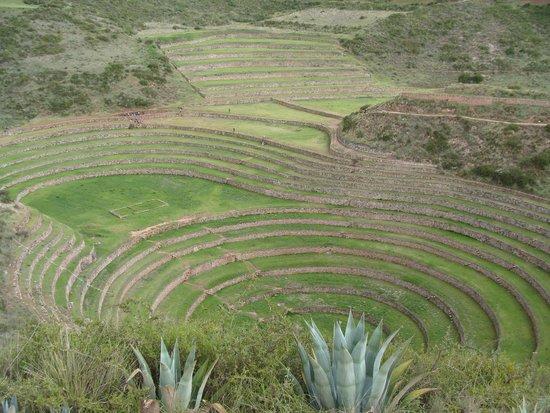 Salinas de Maras: Moray