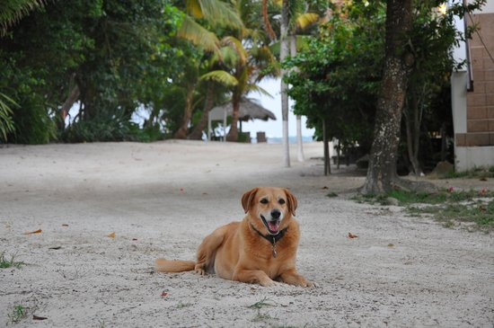 Cocotal Inn & Cabanas: Mara waits patiently to greet next guests