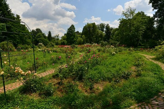 The Botanical Garden (Gradina Botanica): the botanical garden bucharest