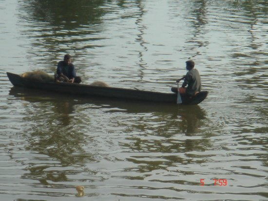 The great expanse of the Vembanad Lake along with trees and canoe boats on the nearby banks.