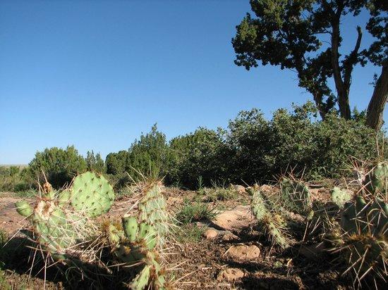 Southwest Wildlife Conservation Center: Desert