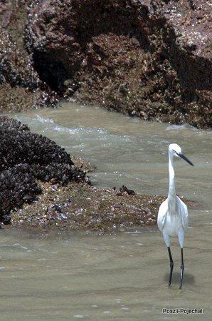 Varkala Beach: Tourist Bird ;)