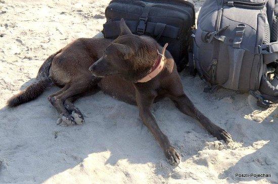 Varkala Beach: Everybody's dogs :)))