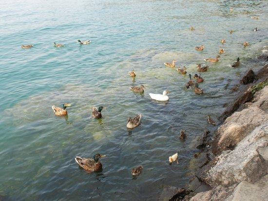 Poiano Resort Hotel: Incantevole localita' a contatto con la natura